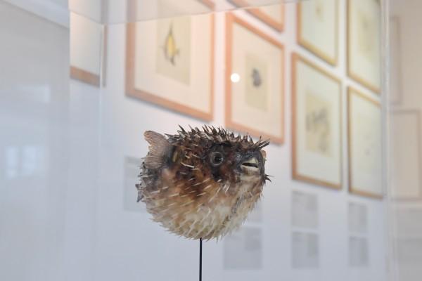 Vaste   museum-escale-australienne@abb-060-lr-redim.jpg